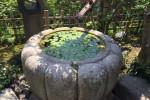 味わいのある水鉢やつくばいが庭を演出。